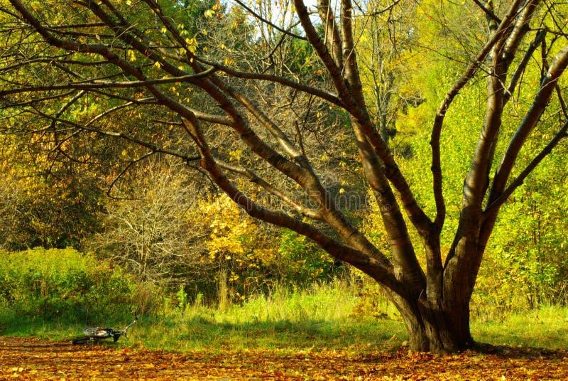 Landschaft am Sommer mit einem Baum und einem Fahrrad lizenzfreie stockfotografie
