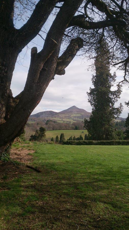 Landschaft-sugarloaf lizenzfreie stockfotografie