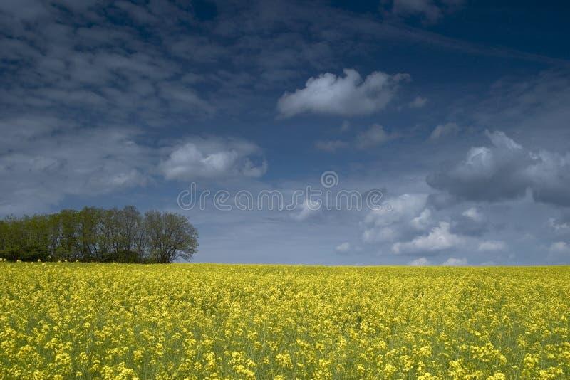 Landschaft in Tricolor stockbild