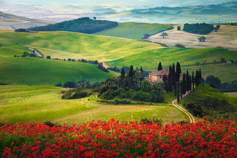 Landschaft und Blütenfelder mit roten Mohn, Toskana, Italien lizenzfreie stockfotos