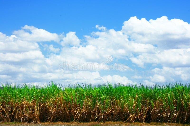 Landschaft vom karibischen Zuckerbauernhof lizenzfreie stockbilder