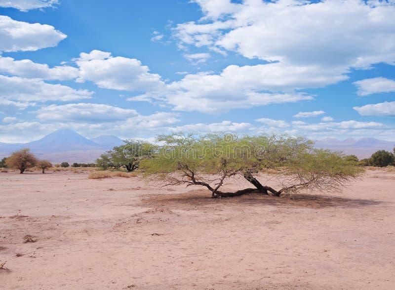 Landschaft von Atacama-Wüste lizenzfreie stockbilder