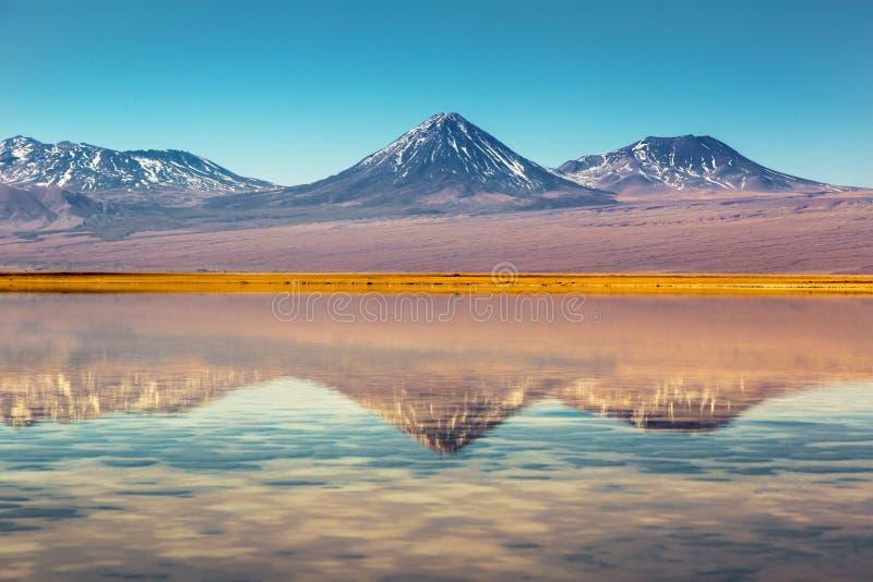 Landschaft von Atacama-Wüste in Chile Blume im Schnee lizenzfreie stockbilder