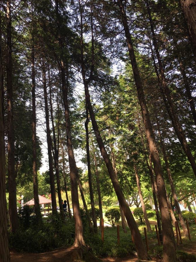 Landschaft von Bäumen stockfotos