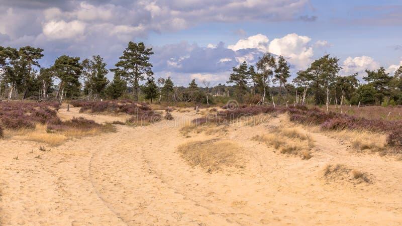 Landschaft von Kalmthoutse Heide lizenzfreies stockfoto