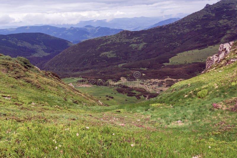 Landschaft von Karpaten-Berge mit Tannenb?umen, grasartigem Tal und Himmel lizenzfreie stockbilder