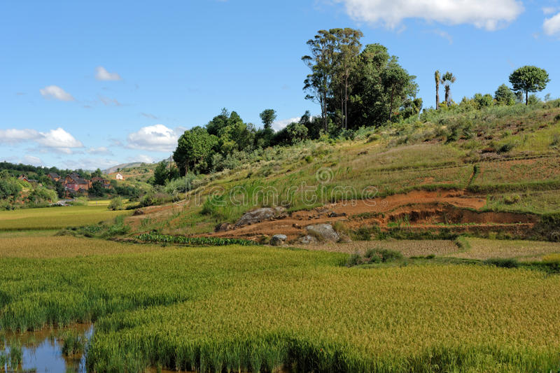 Landschaft von Madagaskar lizenzfreies stockbild