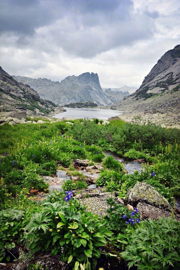 Landschaft von malerischem See des schönen Sommers Gebirgsmit Blumen stockfoto