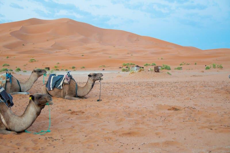 Landschaft von Marokko stockbilder