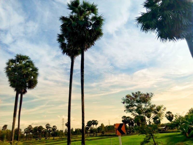Landschaft von Reisfeldern und von schönen Himmeln lizenzfreies stockfoto