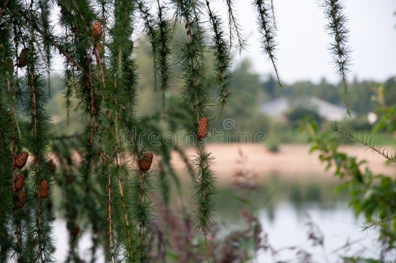 Landschaft von Sachsen stockfotografie