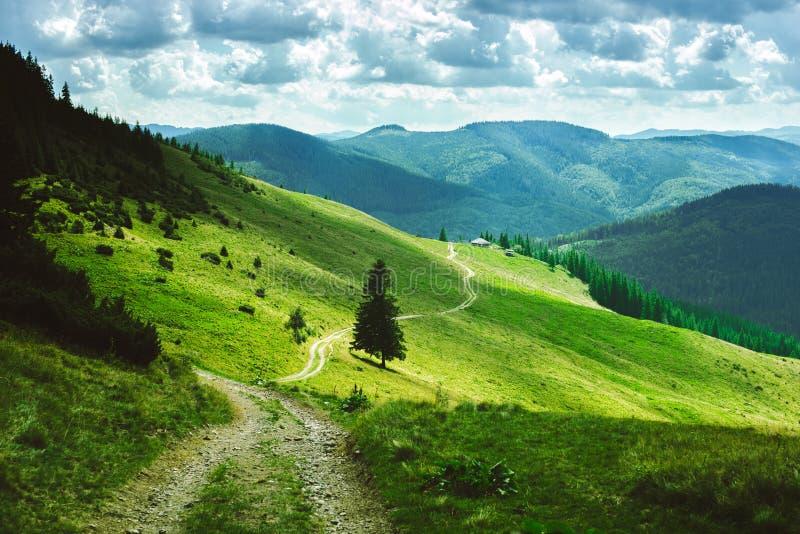 Landschaft von Sommerbergen, grüne Steigungen der Karpaten lizenzfreie stockfotografie