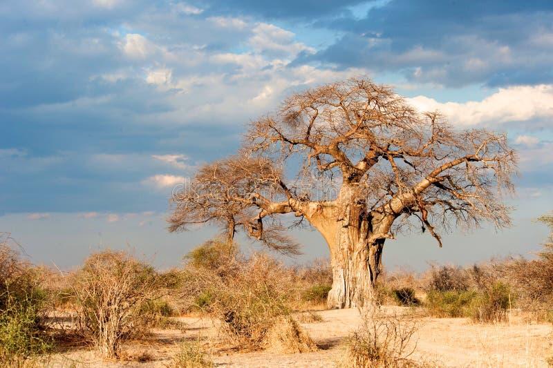 Landschaft von Tansania stockfotos