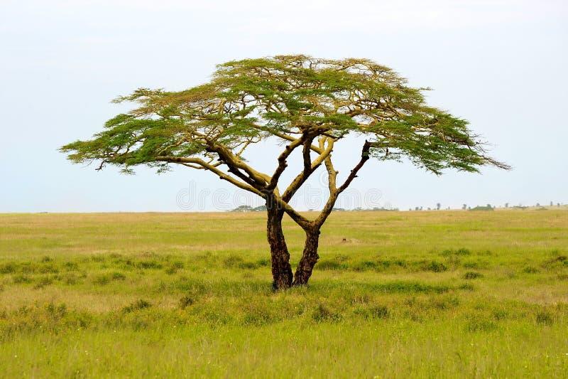 Landschaft von Tansania lizenzfreies stockbild