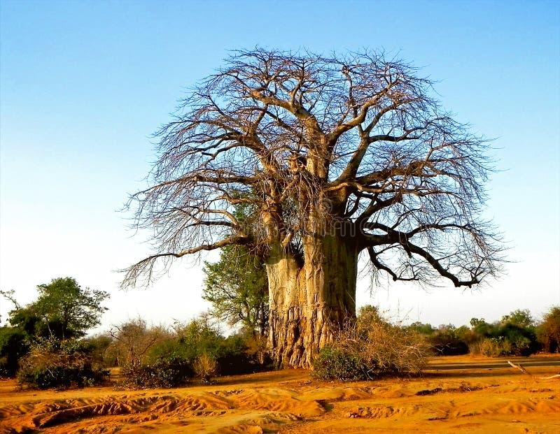 Landschaft von Tansania stockfoto