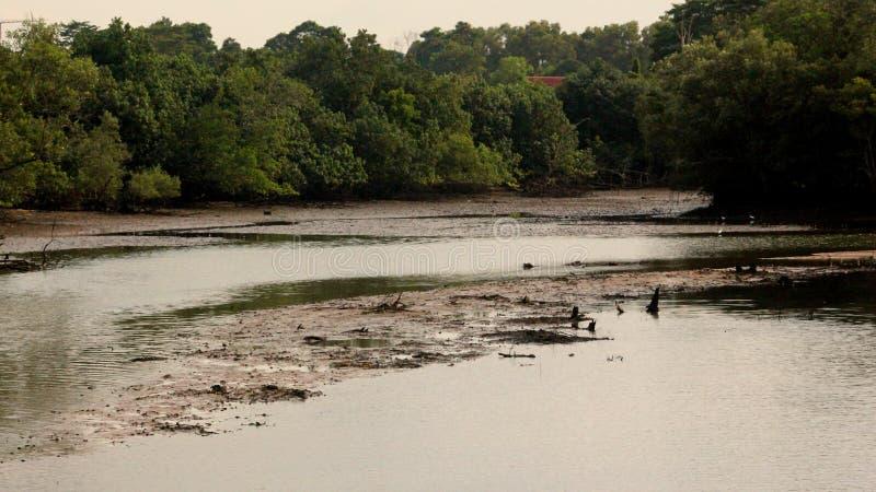 Landschaft von wild lebenden Tieren im Regenwald in Singapur stockfotografie