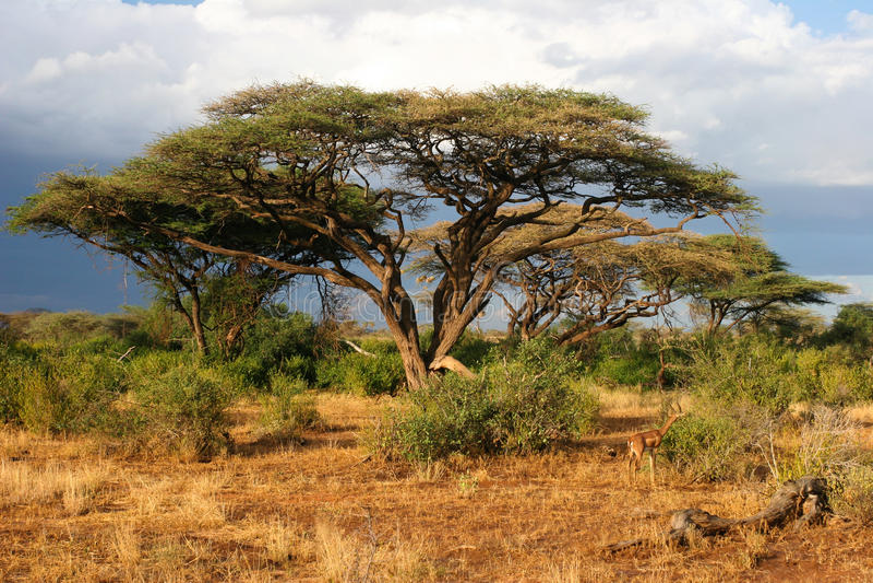 Landschaft vor Sturm, Samburu, Kenia stockbilder