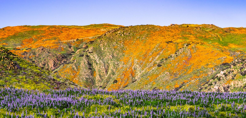 Landschaft in Walker Canyon während des superbloom, Kalifornien-Mohnblumen, welche die Gebirgstäler und die Kanten, See Elsinore  lizenzfreie stockfotos