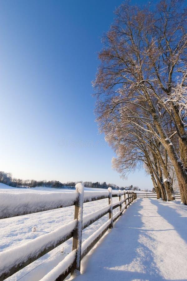 Landschaft, Zaunbäume und Schnee. stockfotografie