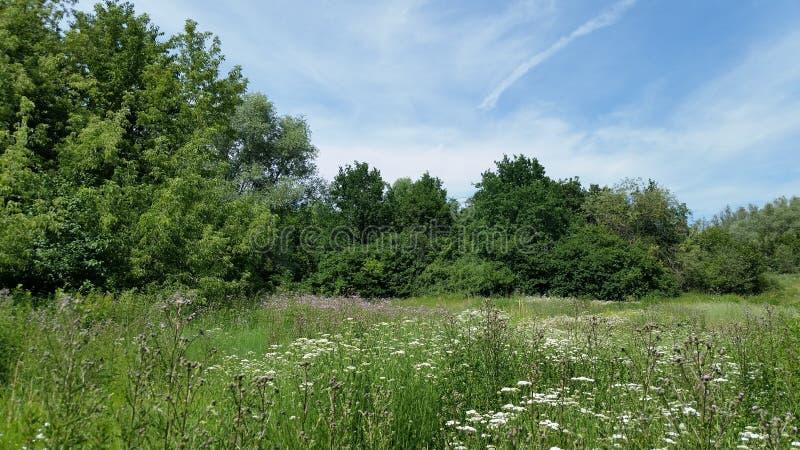 landschaften Bunte knospende wilde Blumen lizenzfreie stockfotografie