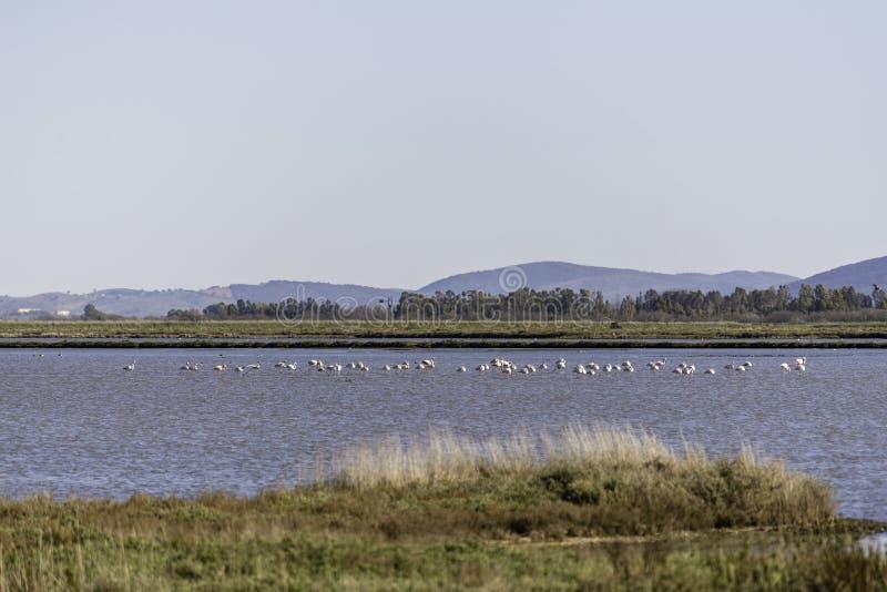 Landschaften natürlicher Reserve Diaccia Botrona lizenzfreies stockfoto