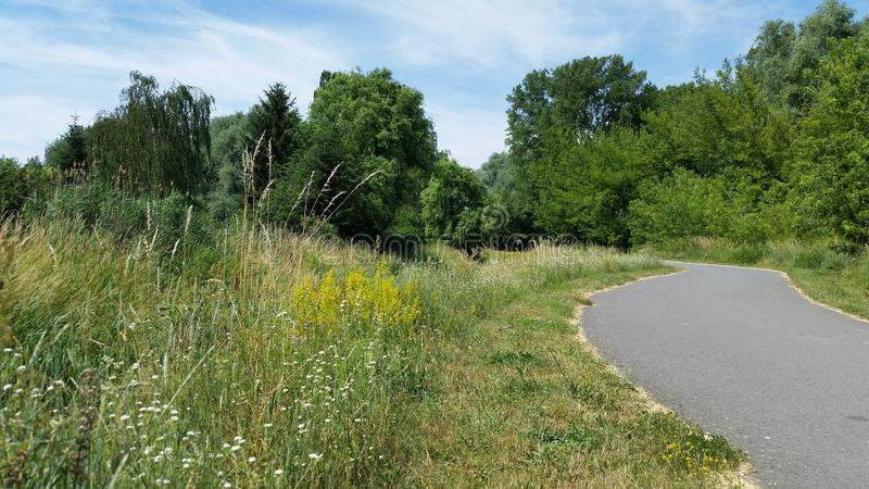 landschaften Straße und bunte wilde Blumen lizenzfreie stockfotografie