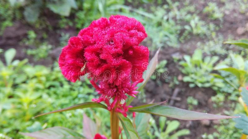 Landschaftliche Schönheit der blühenden Blume stockfotografie