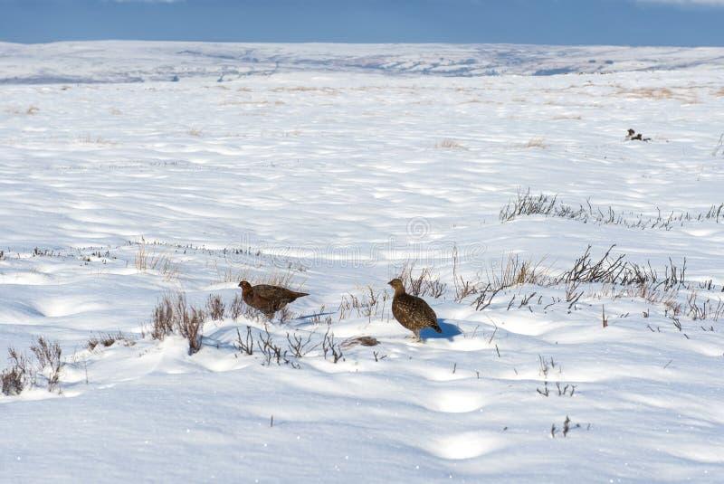 Landschafts-Landschaftsszene des verschneiten Winters lizenzfreie stockbilder