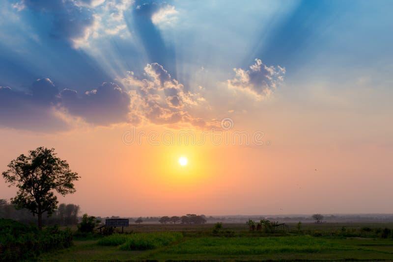 Landschafts-Sonnenuntergang über Reisfeld mit Strahlnhimmel des hellen Strahls der Sonne stockbild