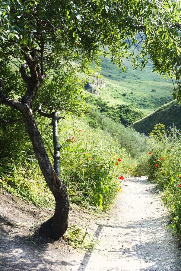 Landschafts-Weg nahe Baum und Blumen unter grünen Hügeln Reise der Selbstentdeckung Natur-gehende Spur lizenzfreie stockfotografie