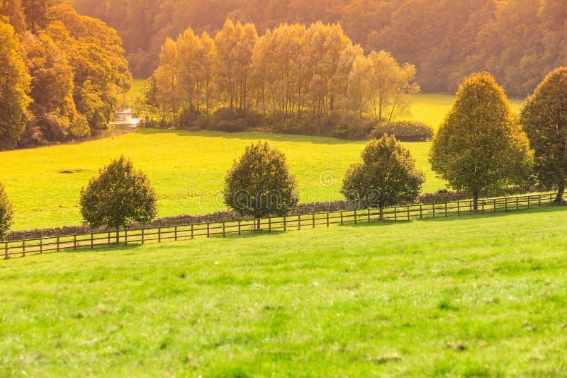 Landschaftsansicht des grünen Feldes Apfelbaum, Sonne, Blumen, Wolken, Wiese? stockbilder