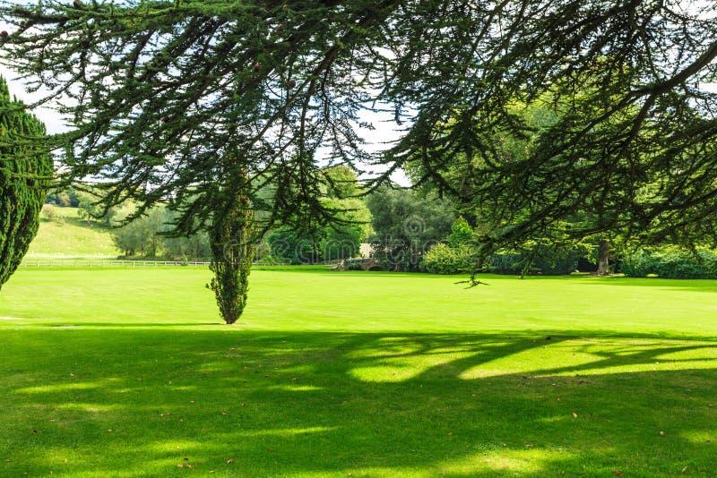 Landschaftsansicht des grünen Feldes Apfelbaum, Sonne, Blumen, Wolken, Wiese? stockfoto
