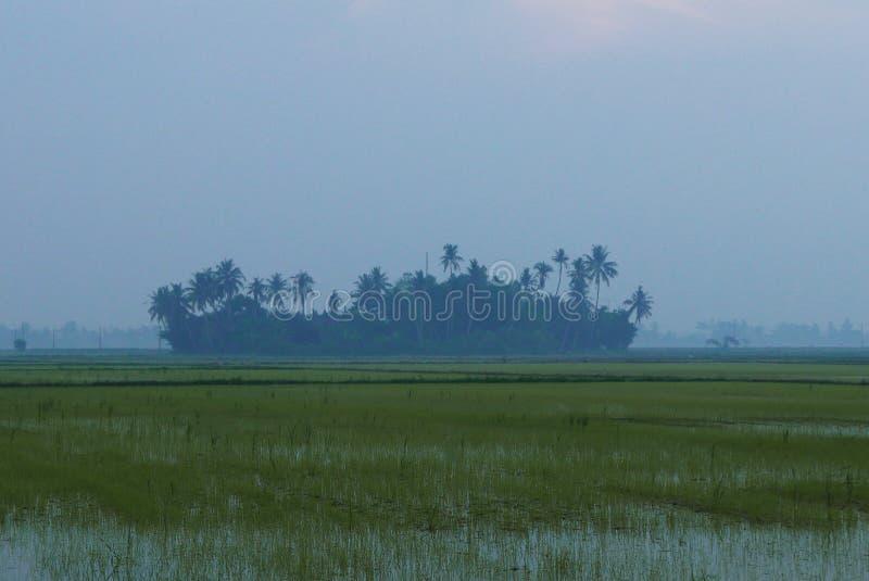 Landschaftsansicht des kleinen Dorfs umgeben durch Reisfeld während des Sonnenaufgangs lizenzfreie stockfotos