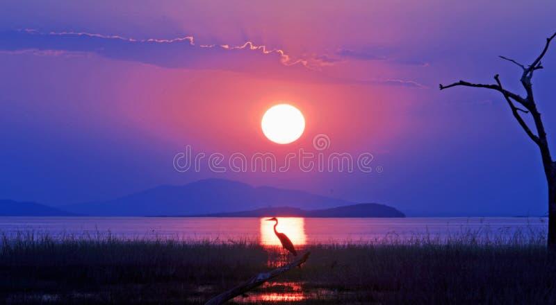 Landschaftsansicht einer schönen untergehenden Sonne über See Kariba mit einem Schattenbild eines Vogels in den Sonnen strahlen a stockbild