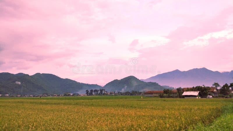 Landschaftsansichten von Reisfeldern mit schöner Gebirgspastellhintergrund lizenzfreie stockfotografie