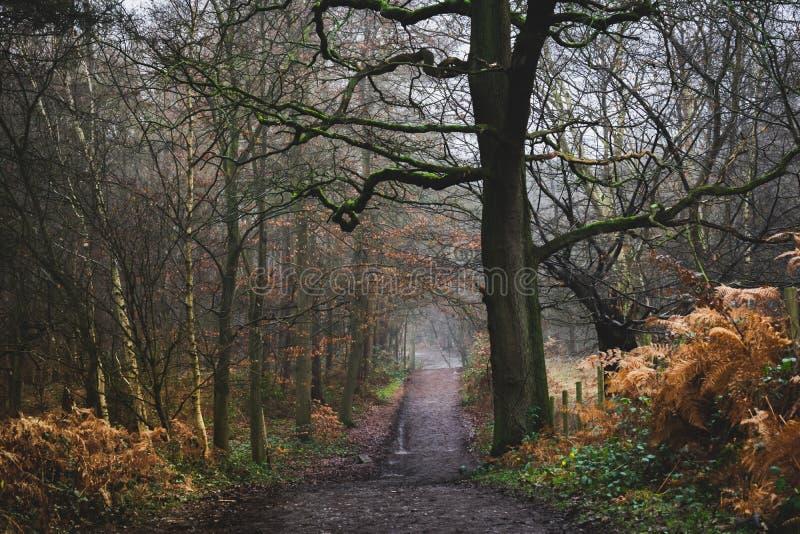 Landschaftsbild der Forstwirtschaft stockbilder