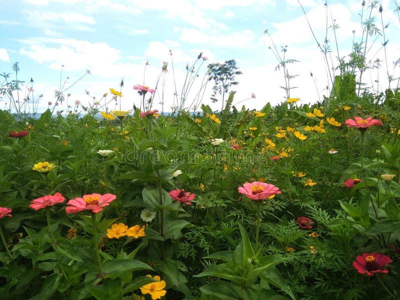 Landschaftsbild, schöne Blumen im Garten tagsüber und passend für Tapete stockbilder