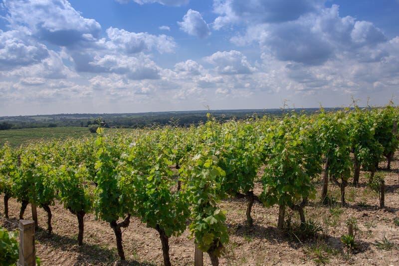 Landschaftsbordeaux wineyard Frankreich, Europa Natur stockbild
