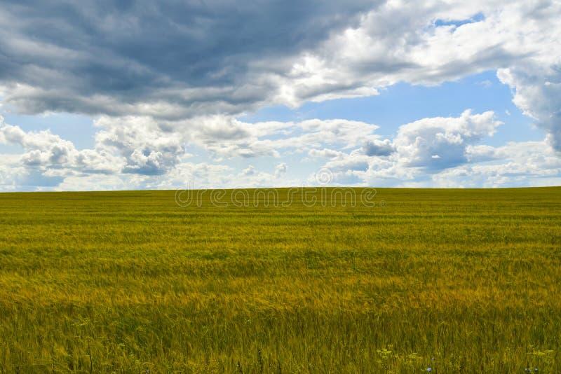 Landschaftsfeld und -himmel mit Wolken lizenzfreies stockfoto