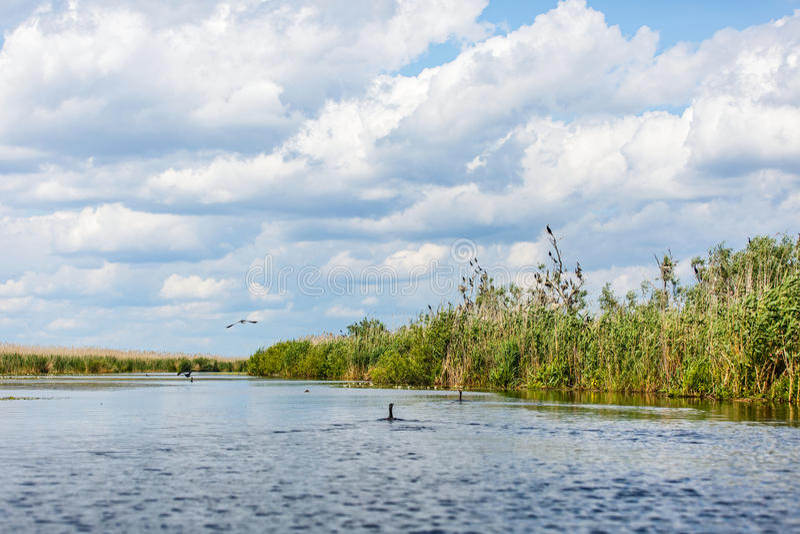 Landschaftsfoto von Donau-Delta lizenzfreie stockfotos