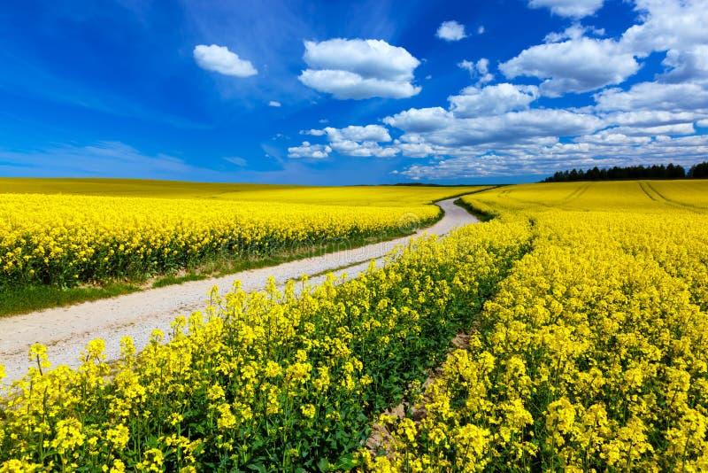 Landschaftsfrühlingsweidelandschaft mit gelben Blumen - Vergewaltigung lizenzfreies stockfoto