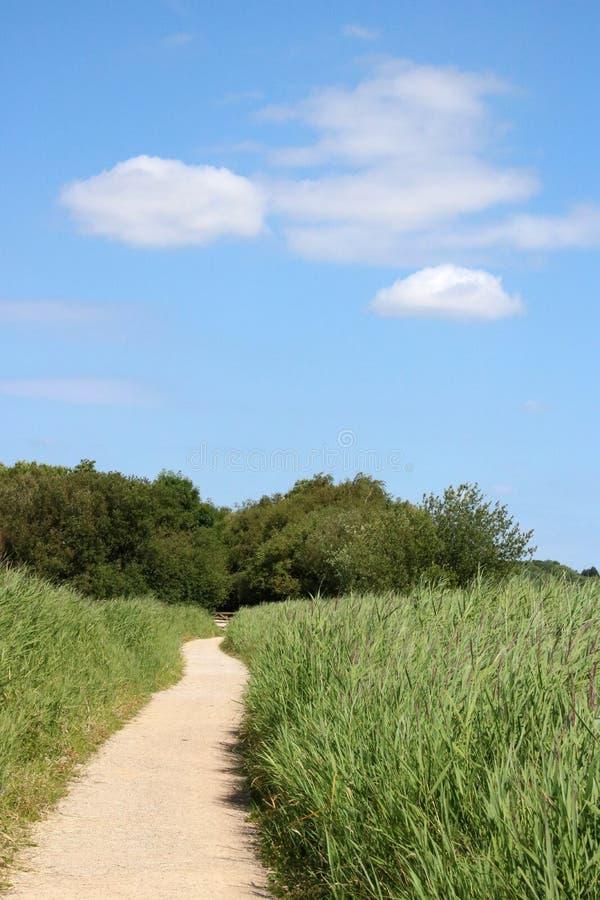 Landschaftsfußweg auf einem Naturreservat, sonniger Tag lizenzfreies stockfoto