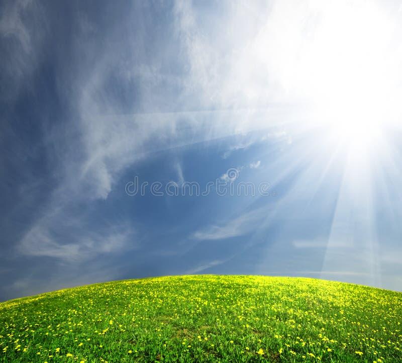 Landschaftsgrünes Feld mit Löwenzahn stockfoto