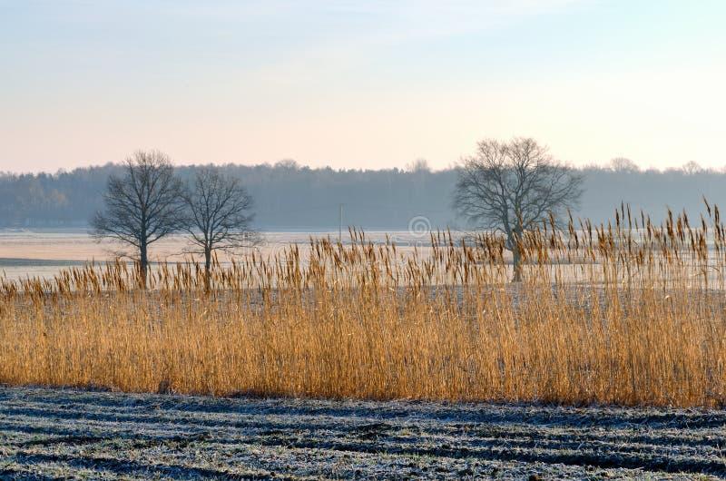 Landschaftslandschaft am frühen Morgen stockfotos