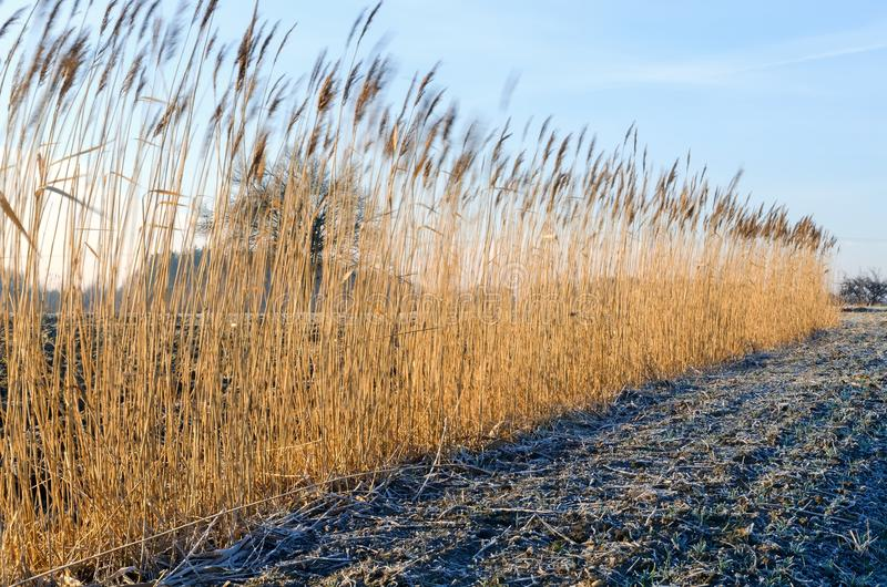 Landschaftslandschaft am frühen Morgen lizenzfreie stockfotos