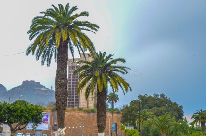 Landschaftspalmenstadt Oran stockfoto
