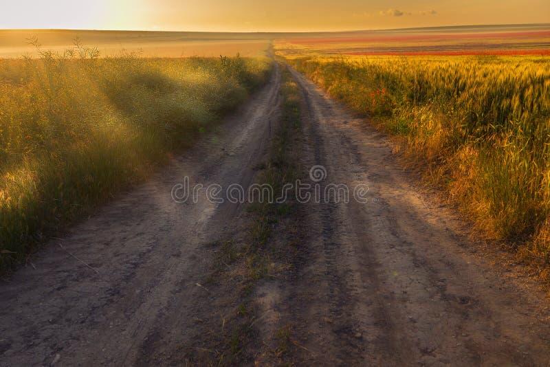 Landschaftsschotterweg, der durch ein Weizenfeld mit Mohnblumen überschreitet stockfoto