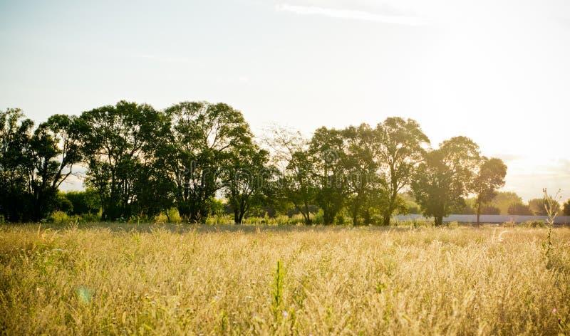 Landschaftssonnenuntergang des Feldes mit Sonnenlicht stockfoto