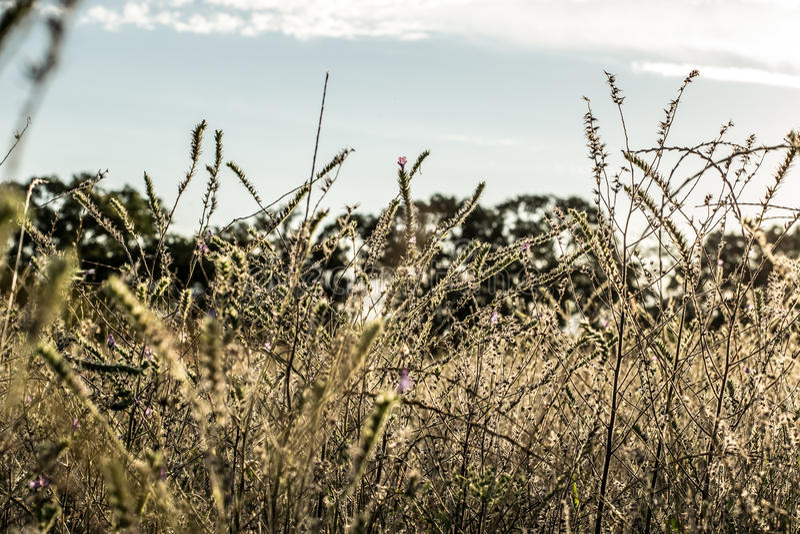 Landschaftssonnenuntergang des Feldes mit Sonnenlicht stockbilder