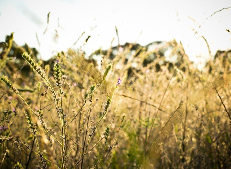 Landschaftssonnenuntergang des Feldes mit Sonnenlicht lizenzfreies stockfoto